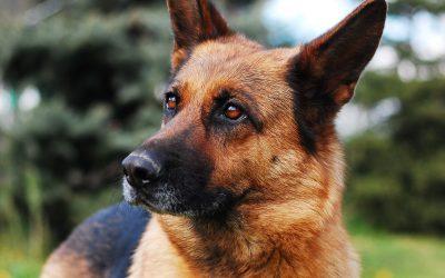 Hond van jou, hond van mij …